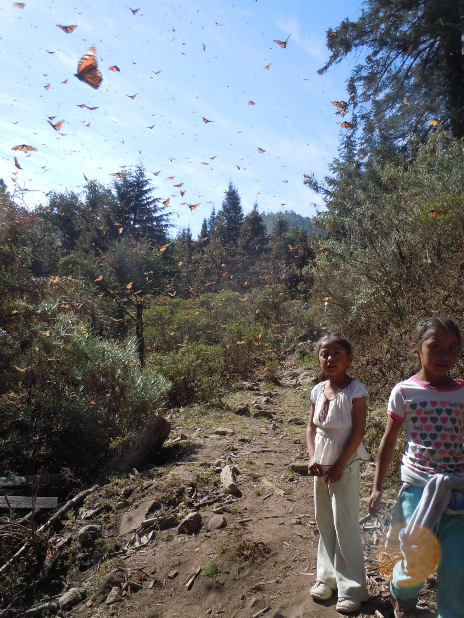 Monarch butterflies in Cerro Pelon, Michoacan, Mexico