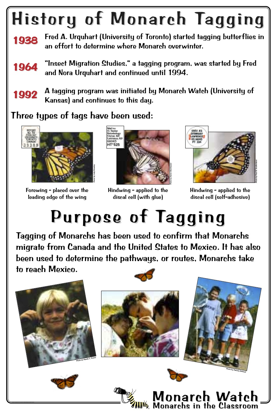 Monarch Watch's Tagging Program: 20 years young!