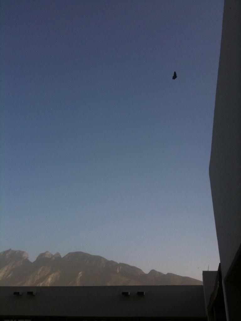 Hola Mariposa monarca in Juarez, Mexico