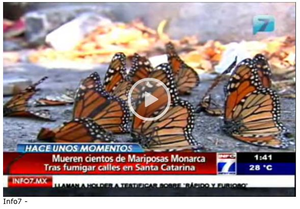 Hundreds of Monarch butterflies killed in Mexico