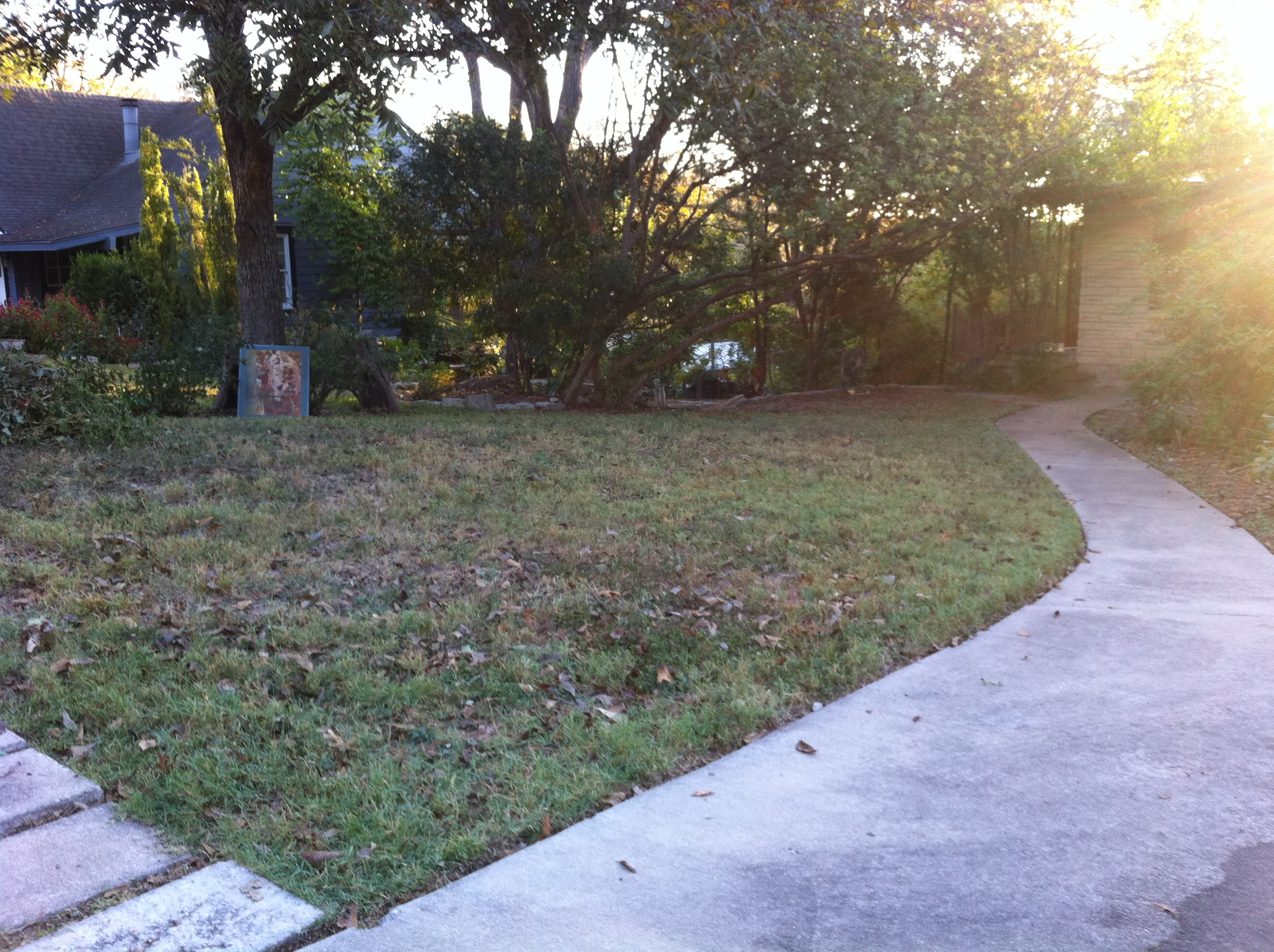 Future butterfly garden in Travis Heights, Austin, 78704 November 2010